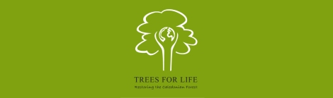 Trees for Life - Restoring the Caledonian Forest